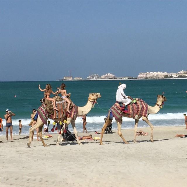 Camel rides on the beach, UAE