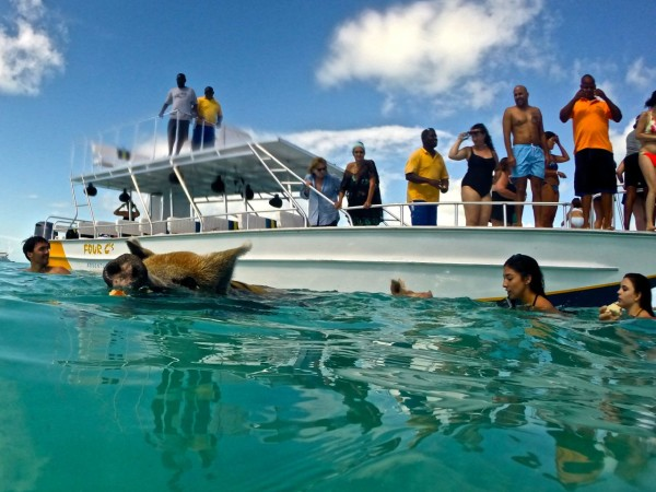 6 Tips for Visiting the Swimming Pigs of Exuma - Inspire
