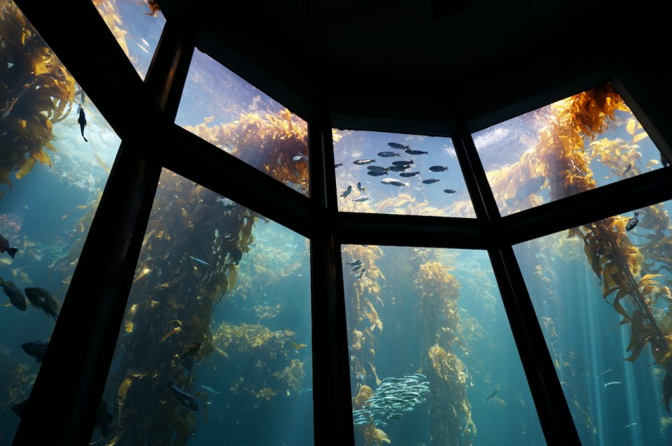 Monterey Bay Aquarium by SLG