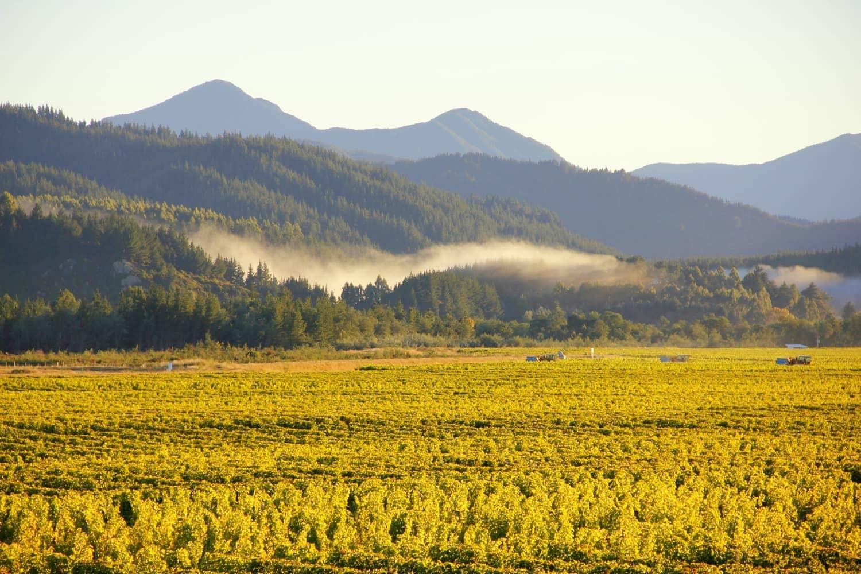 Marlborough Wine Country NZ - HoneyTrek.com
