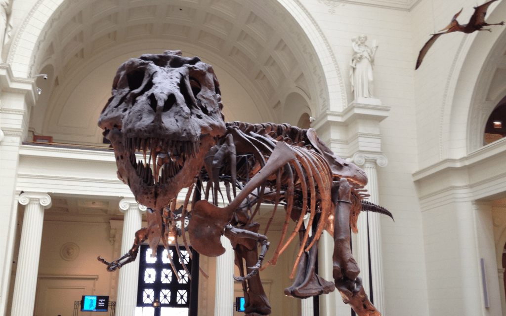 Best-Things-to-Do-in-Chicago-in-the-Summer-Time-Visit-the-Museums-Travelocity