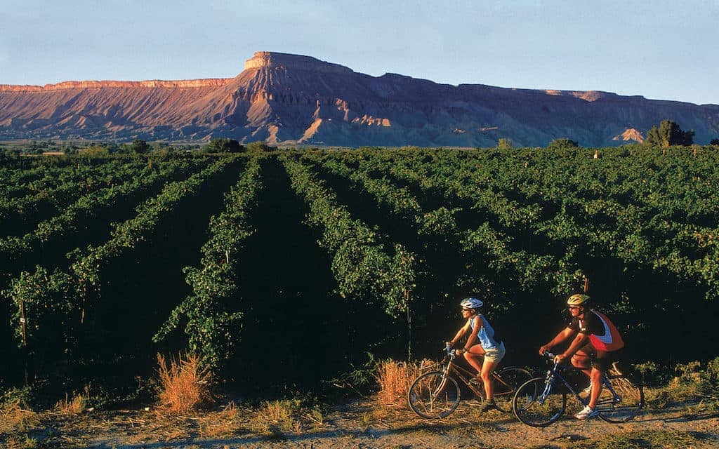 Biking through the vineyards with the Bookcliffs in the background