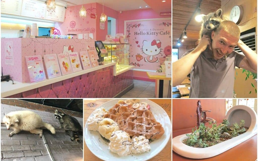 themed cafes in Seoul