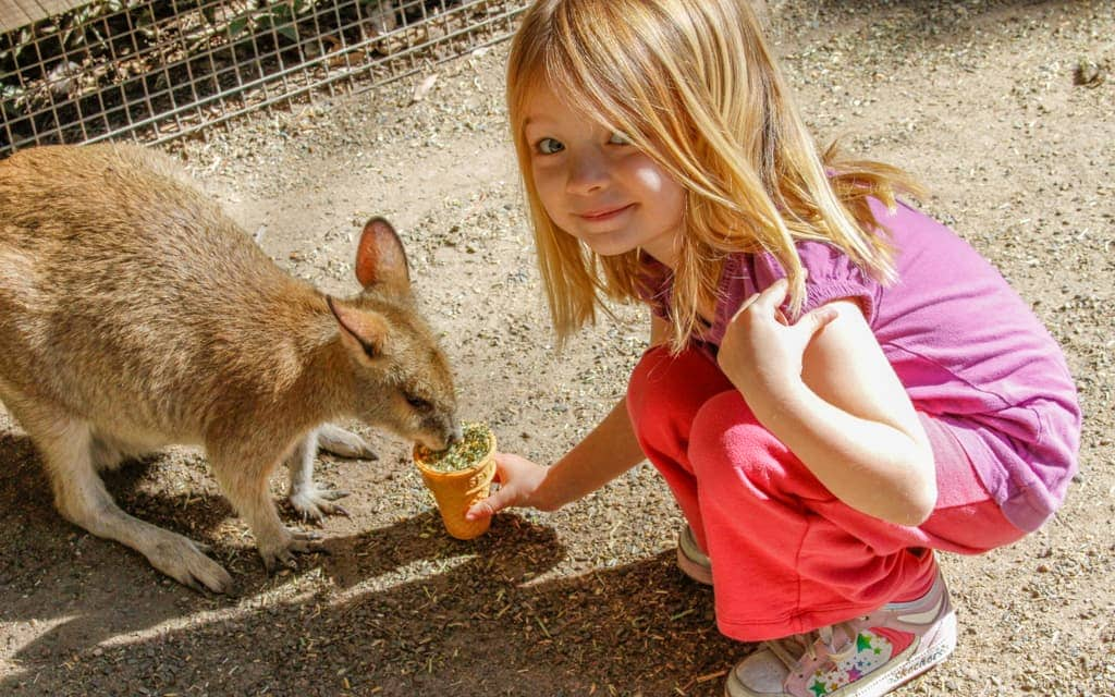 Travel with kids: Feeding kangaroos at Featherdale Wildlife Park outside Sydney (4 years old)