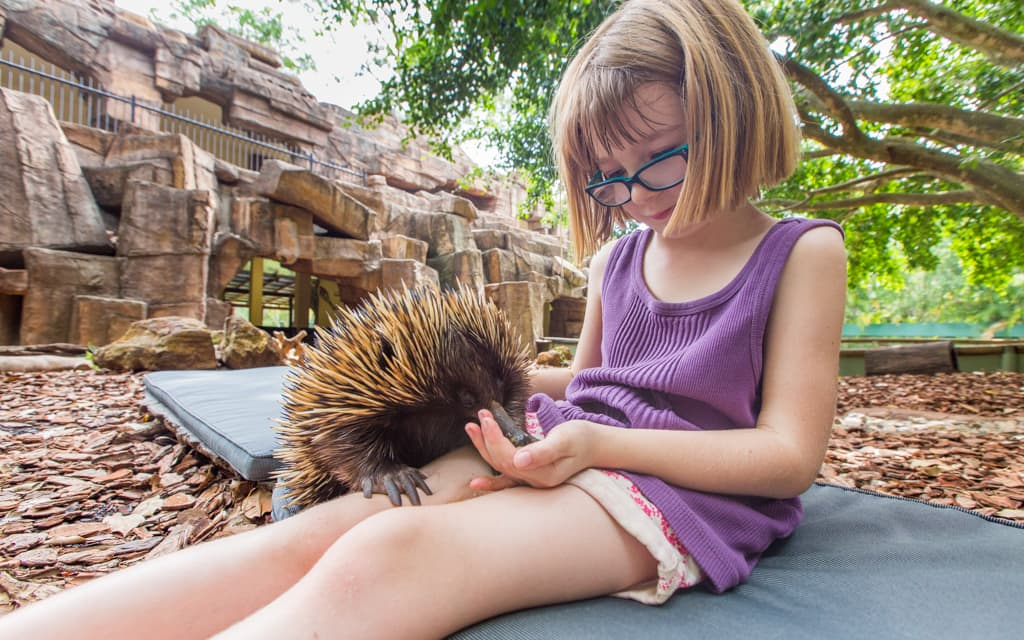 Travel with kids: My youngest feeding an echidna at Australia Zoo