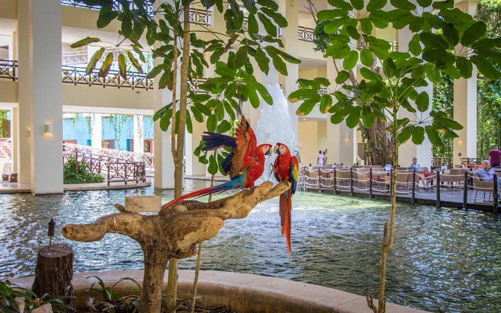Riviera Maya with Kids - Occidental - Parrots in the lobby