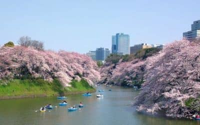 5 Ways to Enjoy the Cherry Blossoms in Tokyo