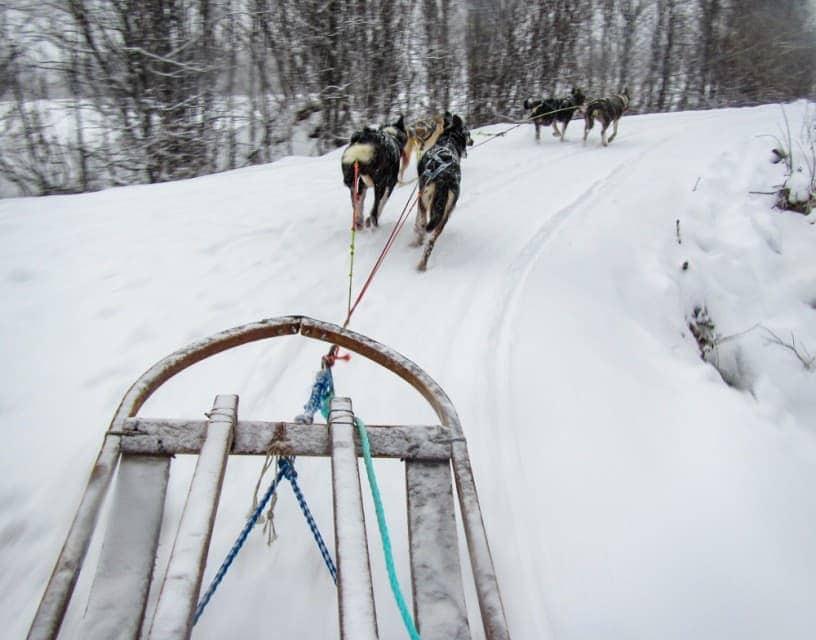 Bucket list activities: husky sled