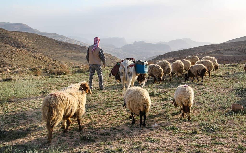 Petra sheep herder