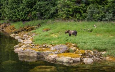 Canada's Prime Destination for Bear Watching