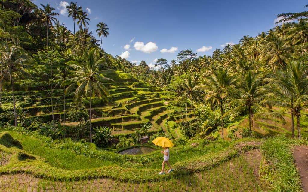 Travel inspiration: The rice fields of Bali Indonesia