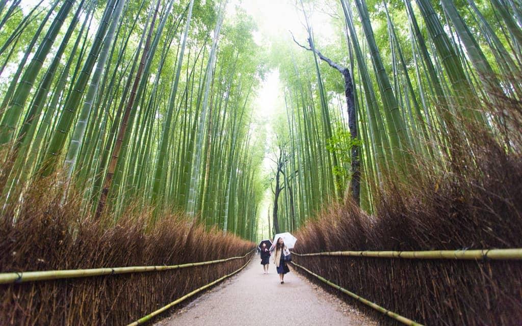 Travel Inspiration: Kyoto's Arashiyama Bamboo Grove