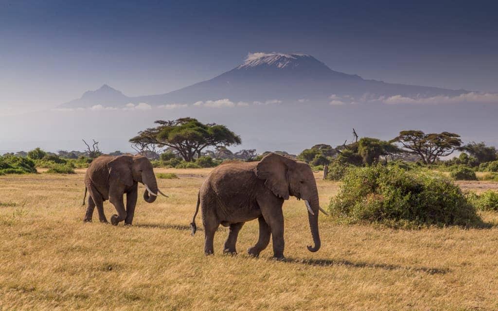 Travel inspiration: Amboseli National Park in Kenya, at the base of Mount Kilimanjaro