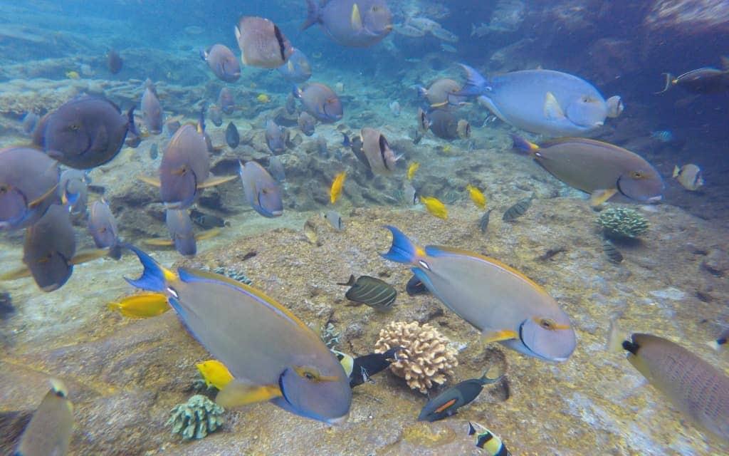 Rainbow reef at Disney's Aulani resort