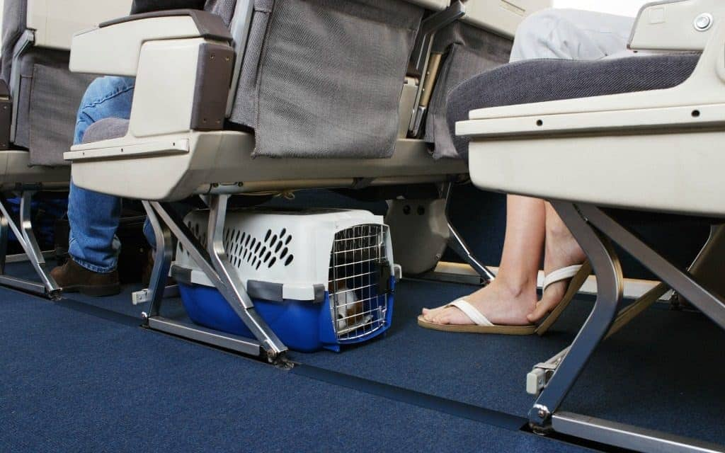 travel tips for flying with your dog - dog in carrier under airplane seat