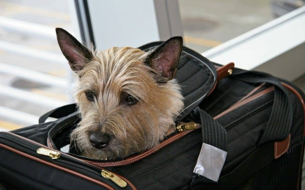 travel tips for flying with your dog - dog in carrier