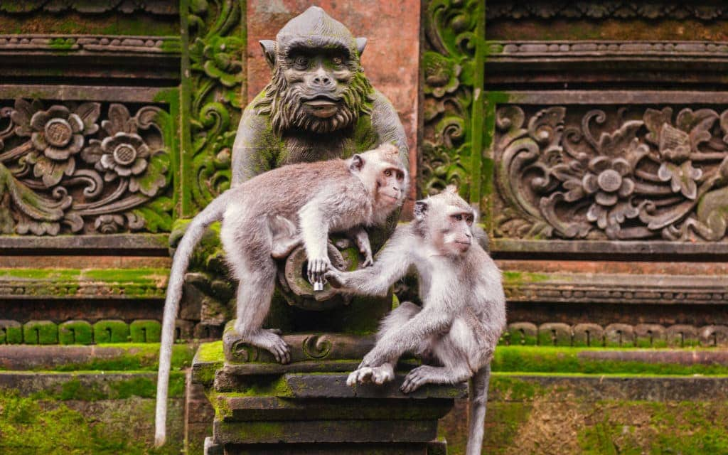 Must do in Bali - monkey forest