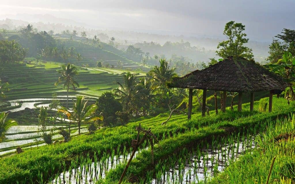Must do in Bali - rice paddy