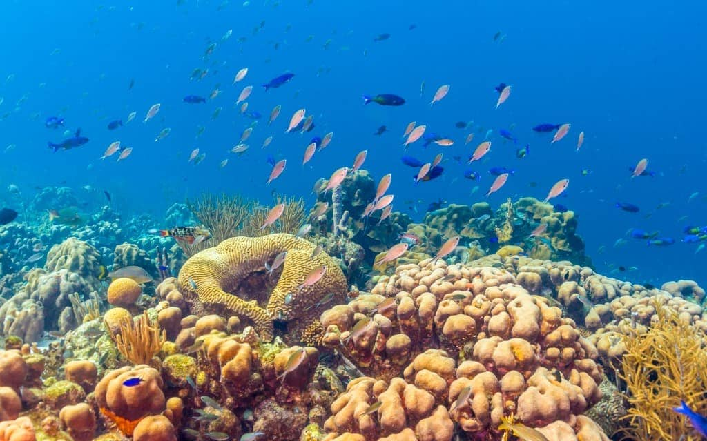 6 Incredible Adventures You Must Try in Bonaire