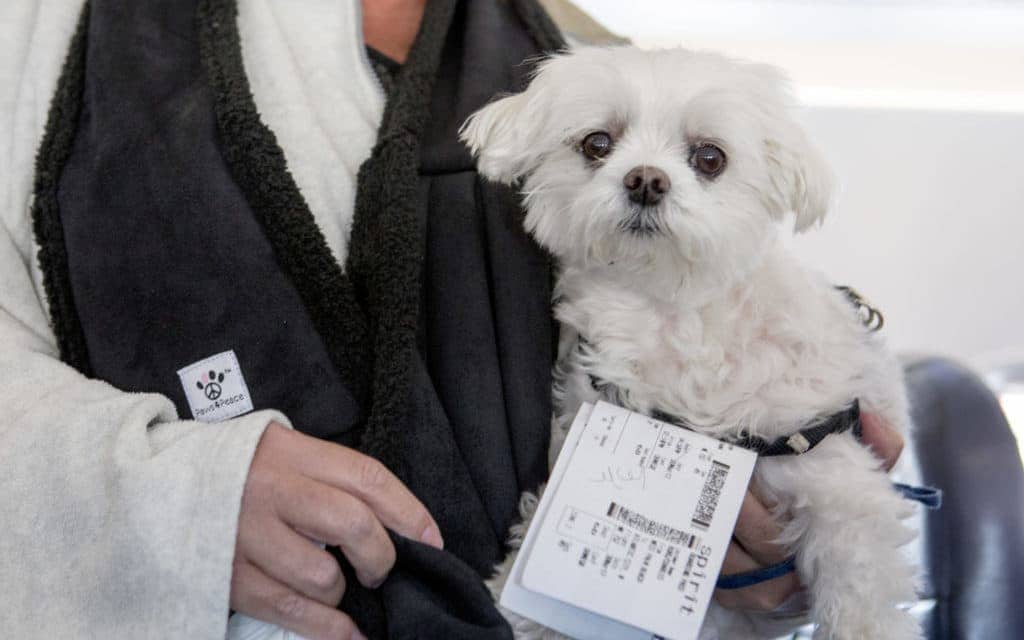 travel tips for flying with your dog - passenger carrying dog