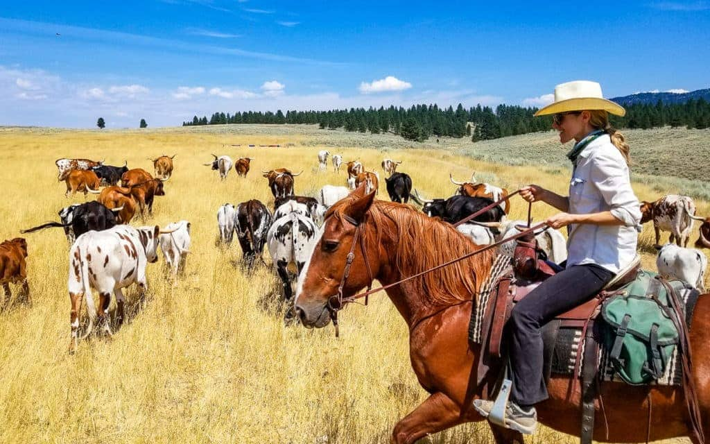 Montana Vacation - Cattle Drive