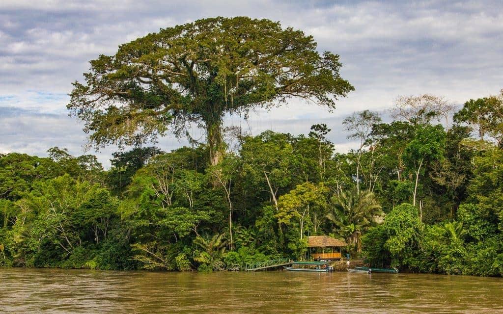 Yasuni_Jungles-Amazon
