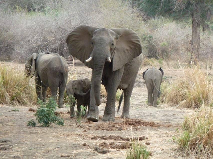 Bucket list activities: safari