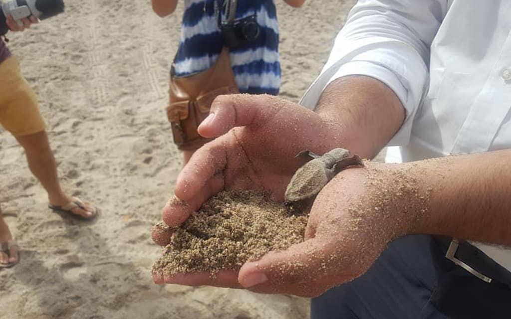 Saving a baby turtle in Puerto Vallarta