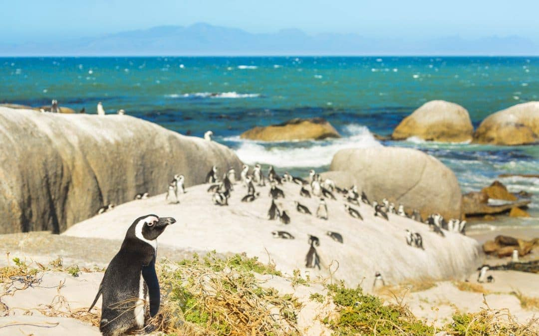 9 Essential South Africa Experiences