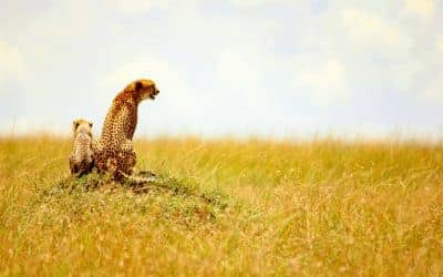 11 Awe-Inspiring Animal Photos to Make You Want to Safari