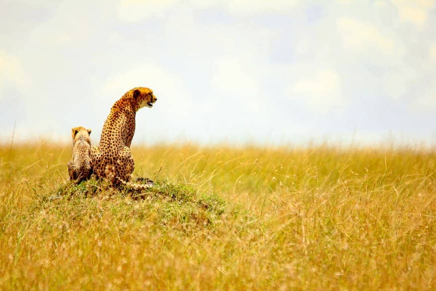 11 Awe-Inspiring Animal Photos to Make You Want to Safari