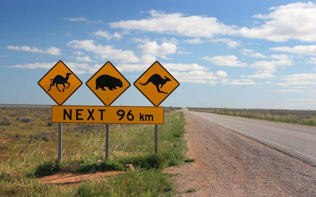 Warning signs for a camel, kangaroo and a wombat in the Australian Outback