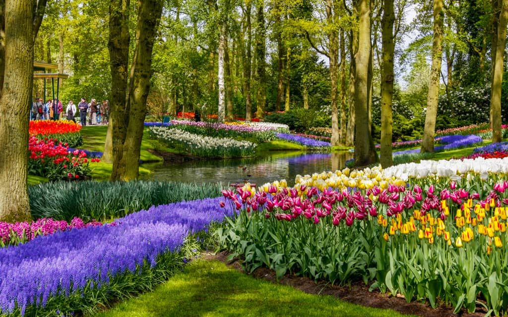 One of the most colorful places in the world is Keukenhof outside Amsterdam by Eric Stoen