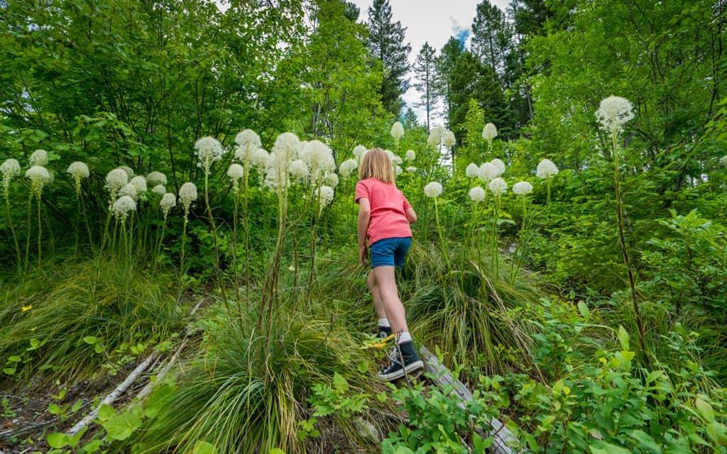 Whitefish, Montana - Hiking through bear grass near Whitefish Mountain Resort