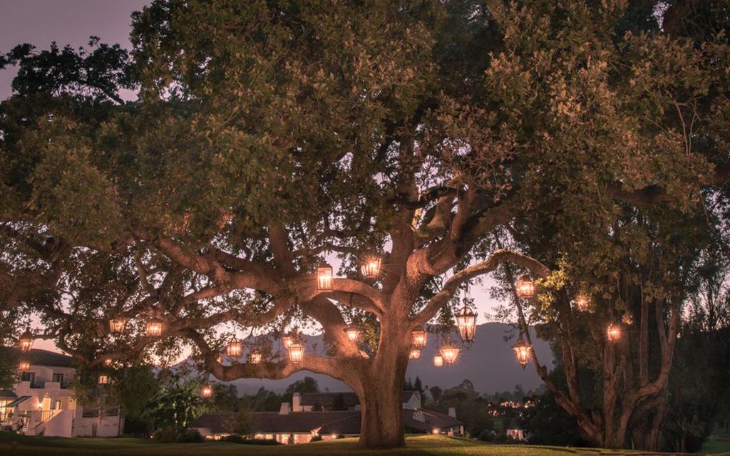 Ojai Valley Inn Tree
