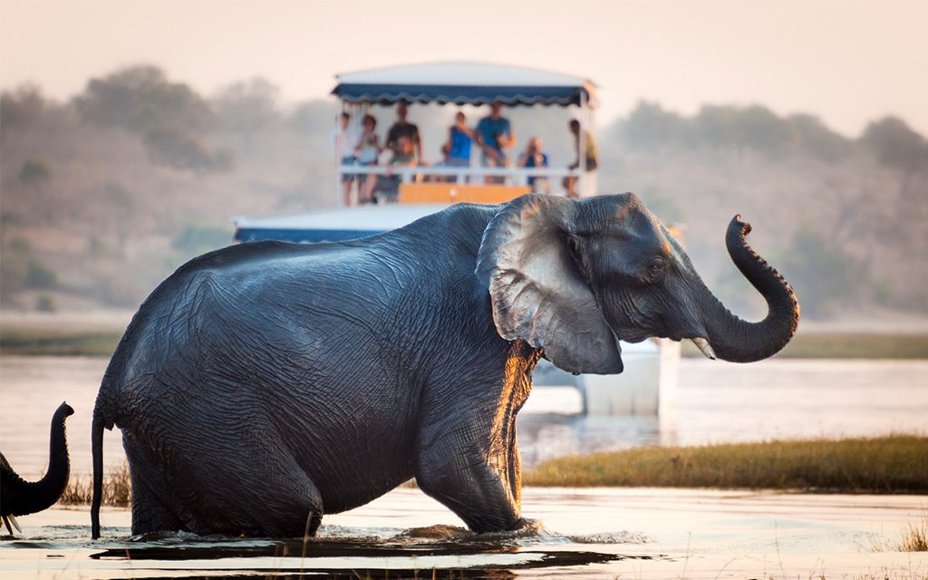 tourists seeing an elephant