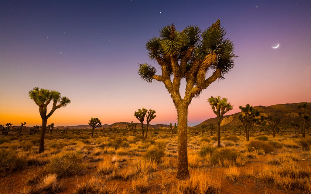 Joshua Tree National Park - Los Angeles Weekend Escapes