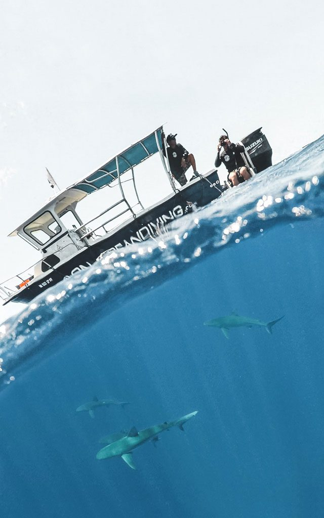 Freediving with sharks in Oahu, Hawaii