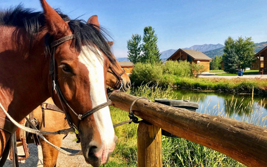 How to Plan a Glorious Day of Horseback Riding