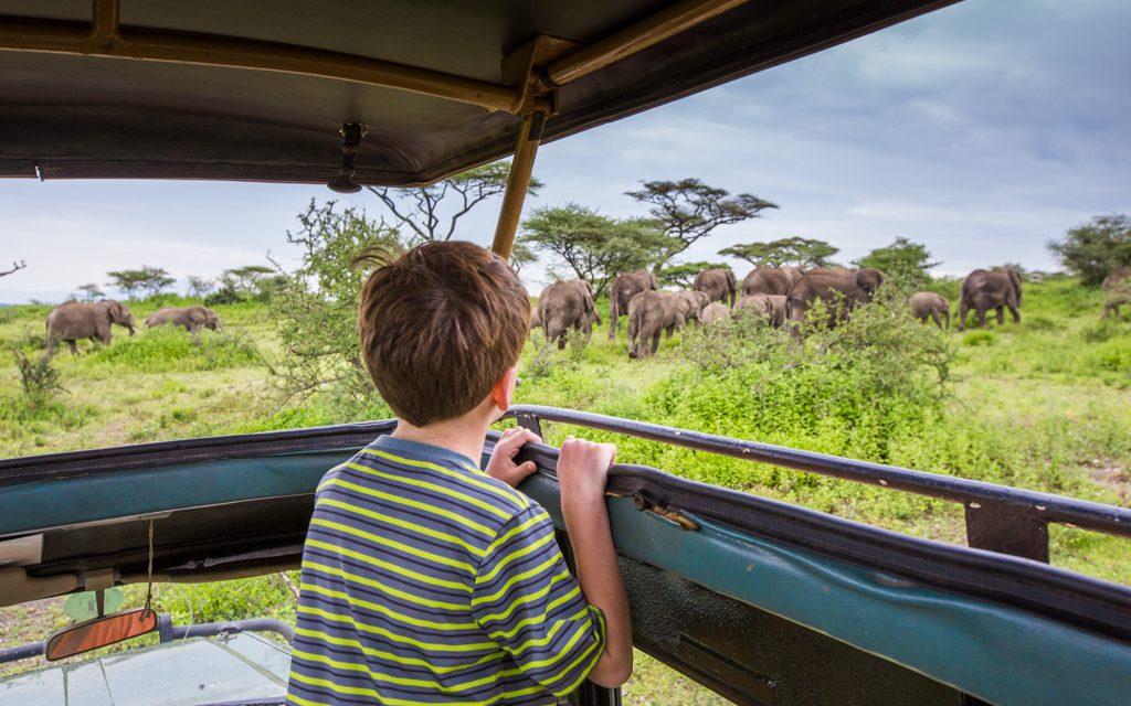 Safari tips - Elephants near Lake Ndutu