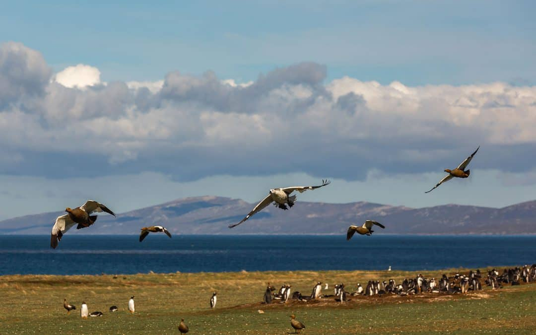 5 Fantastic Sights in the Falkland Islands!