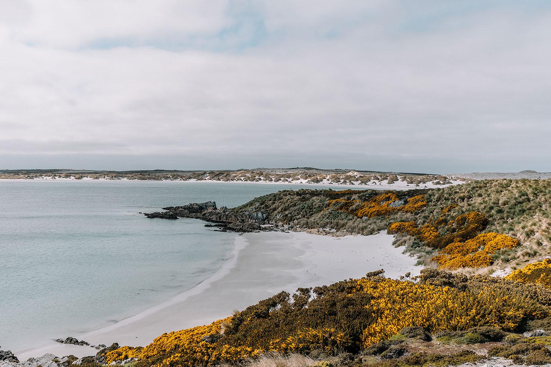 Falkland Islands Gypsy Cove
