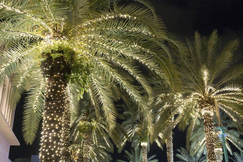 Miami, Florida Christmas
