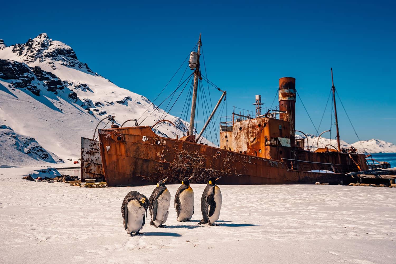 South Georgia Island - Grytviken