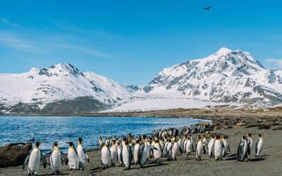 5 Stunning Sights on South Georgia: Penguins, Seals, & Ghost Towns!