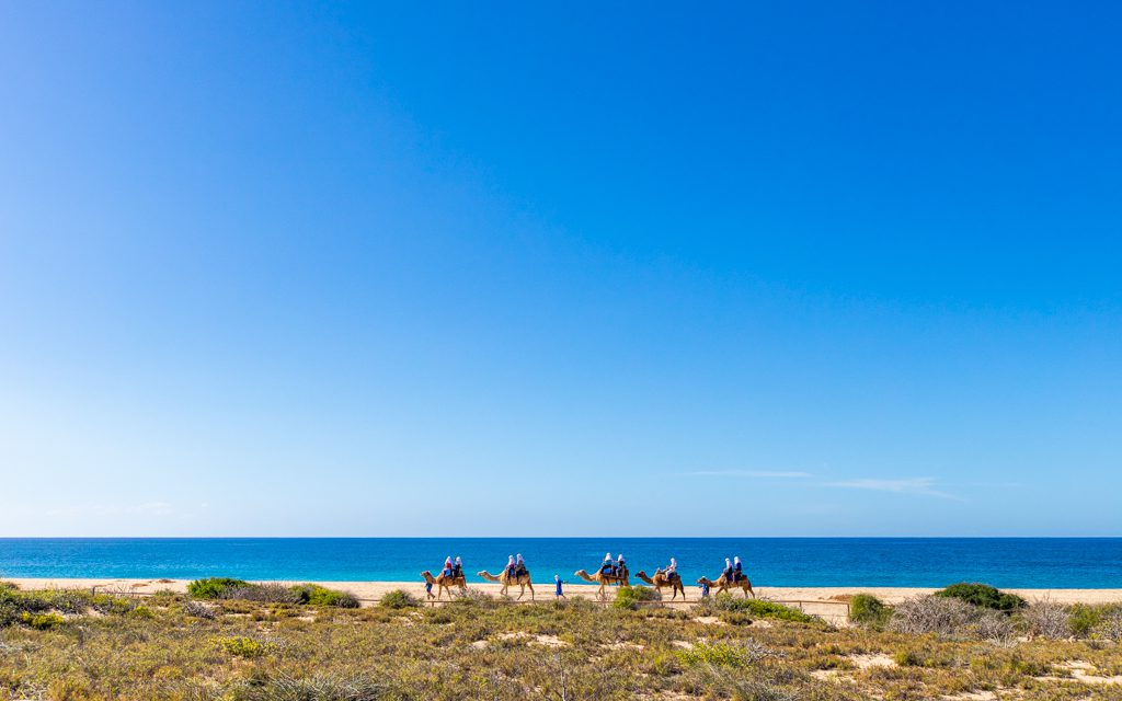 Los Cabos with Kids - Camels on the beach!