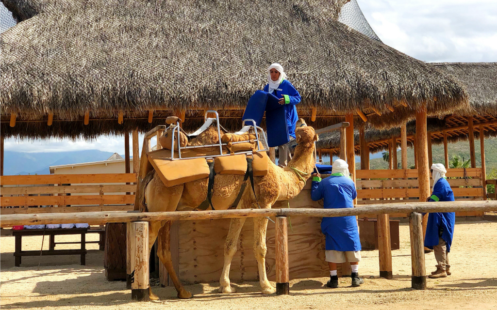 Camel riding in Los Cabos with Cabo Adventures - Travelocity.com - #Gnomads #GnomadsTakeOverCabo #LosCabos #familytravel