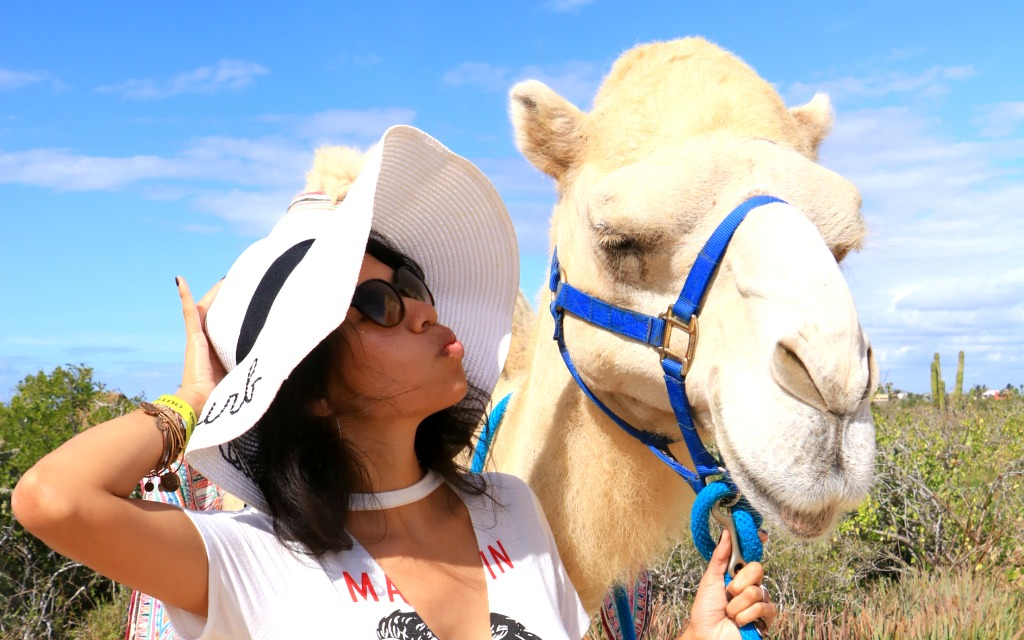 meeting the kissing camel - travelocity.com - #loscabos
