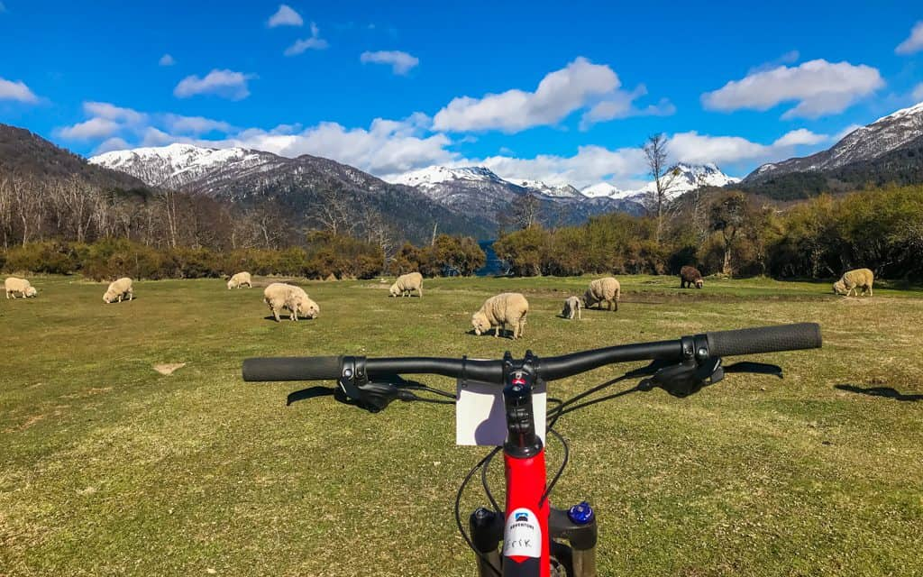 South America - Cycling in Argentinian Patagonia (with sheep)