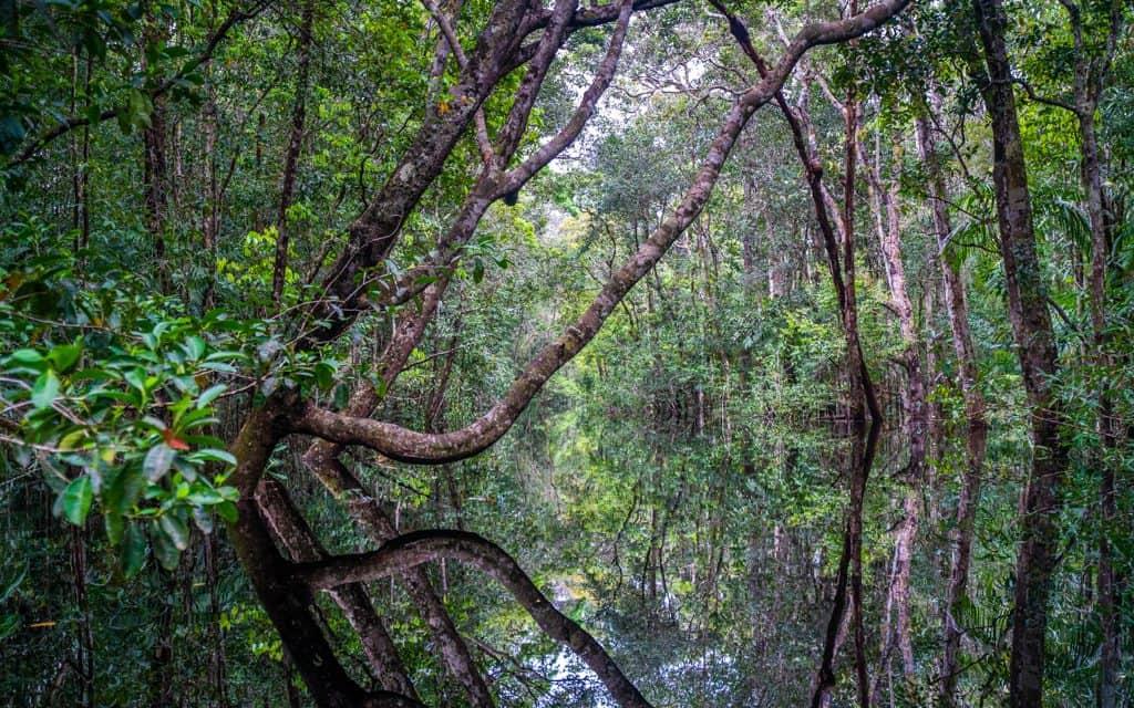 South America - On a boat on the Rio Preto, in Brazil's Amazon Rainforest. Perfect reflections!